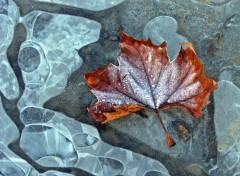 Fonds d'écran Nature Saison du gel