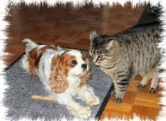 Fonds d'écran Animaux Uskaya et Capucine le chat