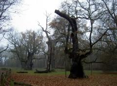 Fonds d'écran Voyages : Europe Les trois arbres