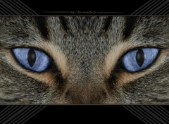 Fonds d'écran Animaux Cat's eyes