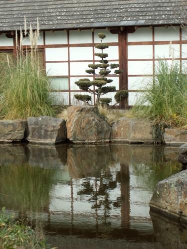 Fonds D écran Nature Fonds D écran Plantes Arbustes Zen