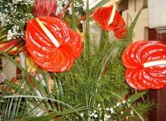 Fonds d'écran Nature Fleur