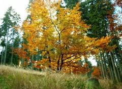Fonds d'écran Nature Merci l'automne pour ces couleurs