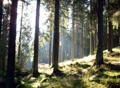 Fonds d'écran Voyages : Europe En pleine forêt tchèque