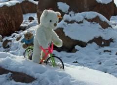 Fonds d'écran Objets Petit Ours Blanc spécialiste du VTT sur neige et glace...