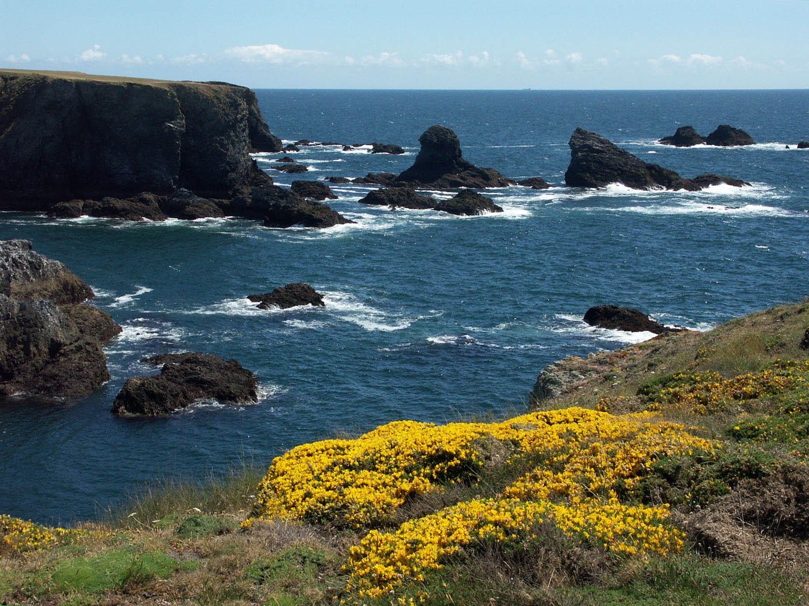 Fonds d'écran Voyages : Europe France > Bretagne Belle_Ile fleurie en mai