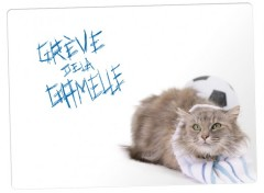 Wallpapers Animals greve de la gamelle