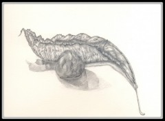 Fonds d'écran Art - Crayon Nature Morte