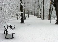 Fonds d'écran Nature Saison d'hiver