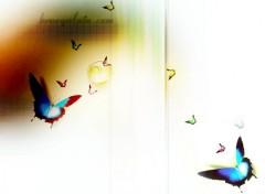 Wallpapers Digital Art papillon it