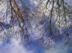 Wallpapers Nature Reflets