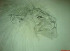 Wallpapers Art - Pencil lion