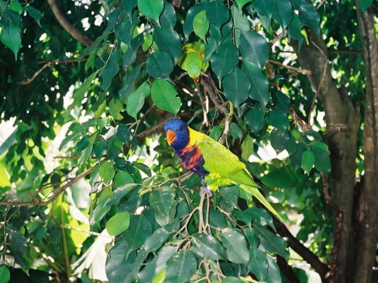 Wallpapers Animals Birds - Misc tropical