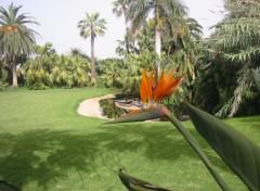 Fonds d'écran Voyages : Afrique Tenerife - Loro-Parque
