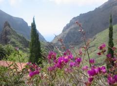 Fonds d'écran Voyages : Afrique Vallée de Masca (Tenerife) 2