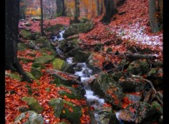 Fonds d'écran Nature petit ruisseau à Spa