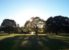 Fonds d'écran Nature Botanic Garden de Sydney