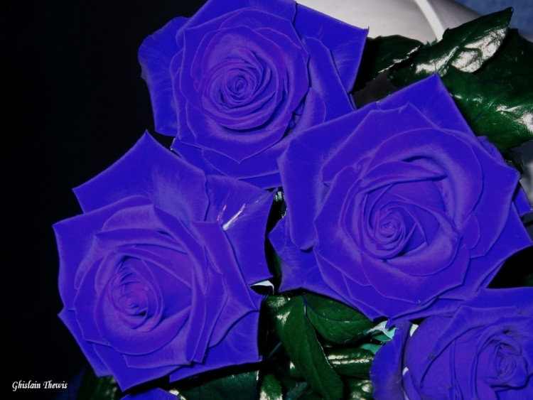 Fonds d'écran Nature Fleurs Wallpaper N°133175
