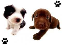 Wallpapers Animals Chiots