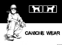 Wallpapers Humor Caniche Wear