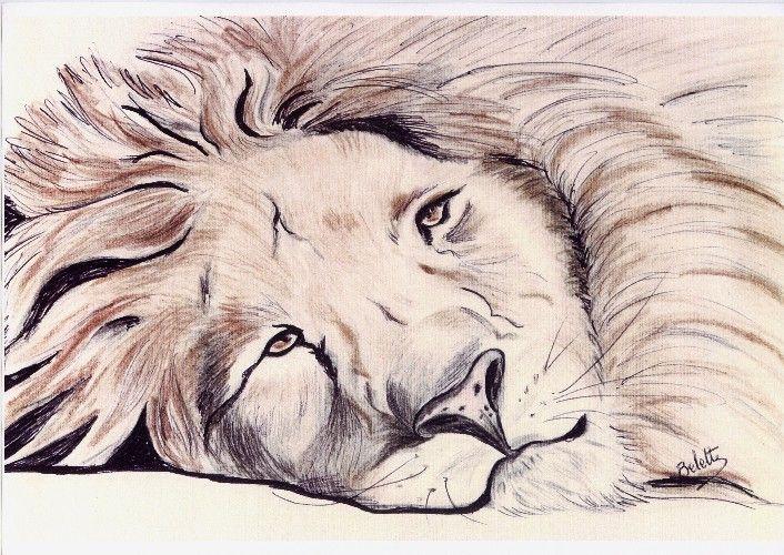 Wallpapers Art - Pencil Animals - Felines Lion