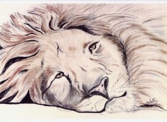 Wallpapers Art - Pencil Lion