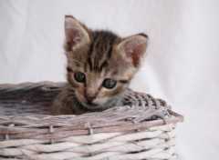 Wallpapers Animals chaton 002