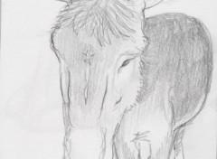 Fonds d'écran Art - Crayon âne de foire