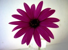 Fonds d'écran Nature jolie fleur