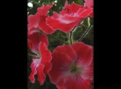 Fonds d'écran Nature BX-SerresRoyales-3-