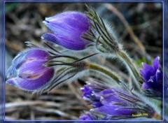 Fonds d'écran Nature Petite Fleur