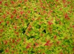 Fonds d'écran Nature plantes de mon jardin