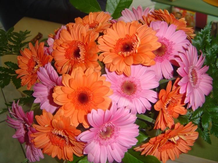Fonds d'écran Nature Fleurs Gerboras.