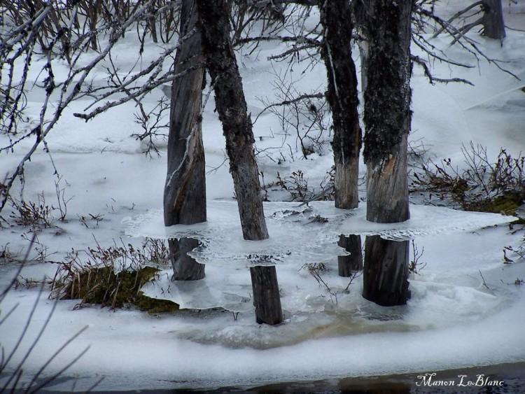 Fonds d'écran Nature Arbres - Forêts Phénomêne de la nature