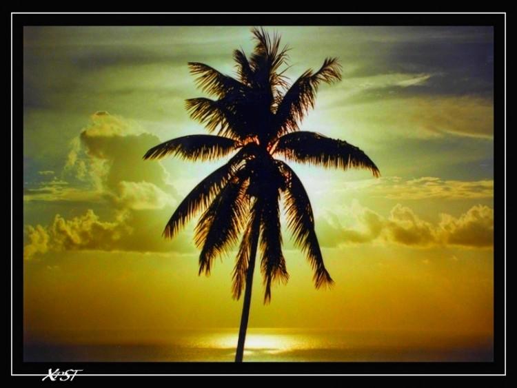 Fonds d'écran Voyages : Océanie Tahiti THE PALMIER
