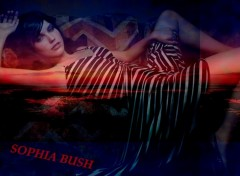 Fonds d'écran Célébrités Femme Sophia Bush