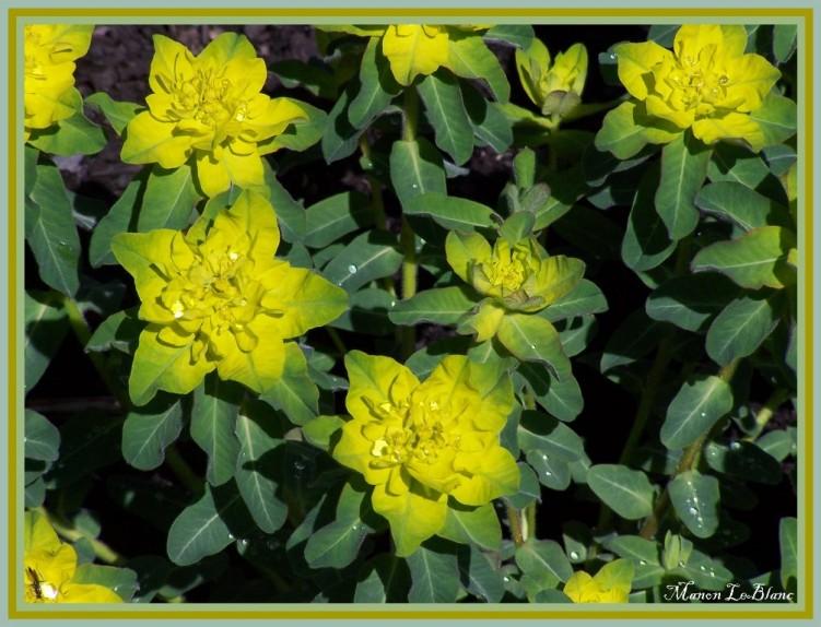 Fonds d'écran Nature Fleurs Wallpaper N°140041
