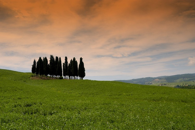 Fonds d'écran Voyages : Europe Italie Cipressi - Toscana
