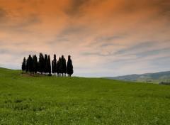Fonds d'écran Voyages : Europe Cipressi - Toscana