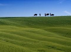 Wallpapers Trips : Europ Toscana
