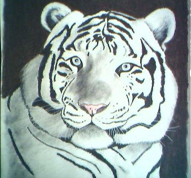 Wallpapers Art - Pencil Animals - Felines tigre blanc