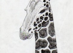 Wallpapers Art - Pencil girafe