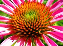 Fonds d'écran Nature Image sans titre N°144435