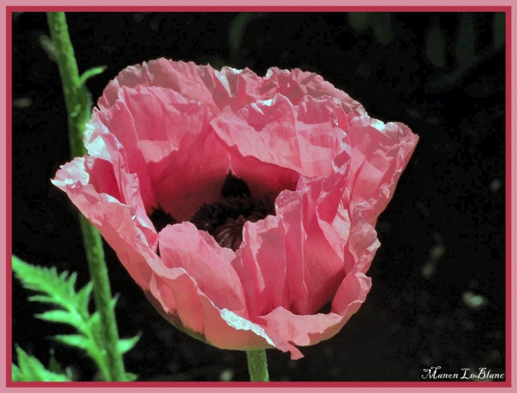 Fonds d'écran Nature Fleurs Wallpaper N°144642