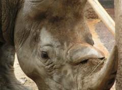 Wallpapers Animals rhinocéros