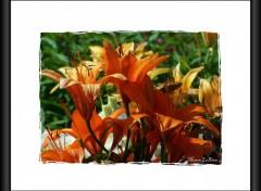 Fonds d'écran Nature Image sans titre N°145780