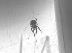 Wallpapers Digital Art Spider