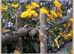 Fonds d'écran Nature clôture remplie de fleurs