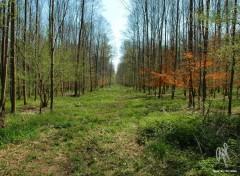 Fonds d'écran Nature L'Illwald, Alsace