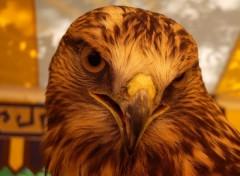 Fonds d'écran Animaux faucon